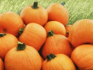pile-of-pumpkins-320x240